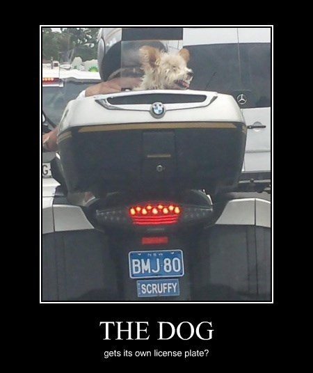 dogs wtf license plate - 8448323584