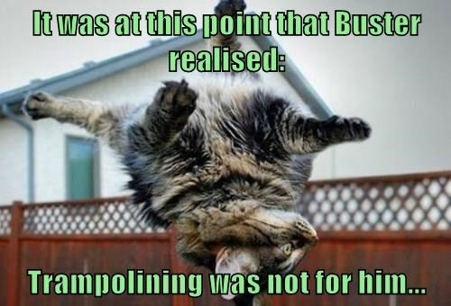 cat,trampoline,caption