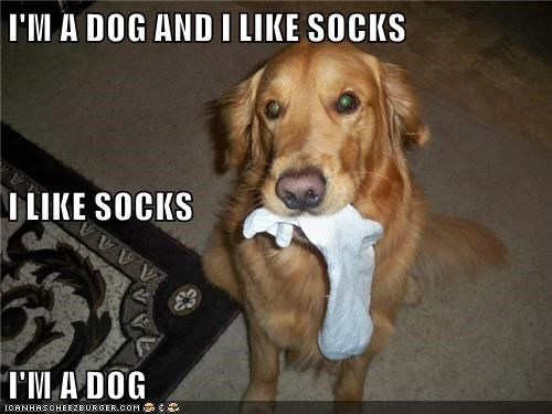 I'M A DOG AND I LIKE SOCKS I LIKE SOCKS I'M A DOG