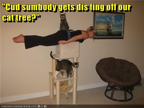 go away,Planking,cat tree,Cats