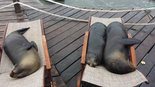 cute baby animals sea lions lounging