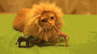 An Adorably Fierce Jungle Kitten