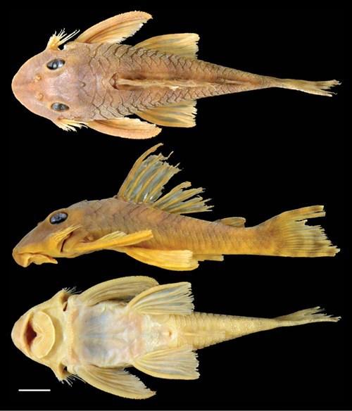 geek news catfish named after greedo star wars