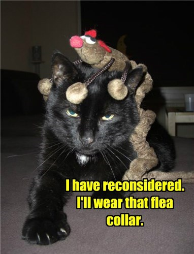cat reconsidered caption collar flea - 8448885760