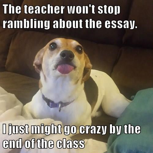 The Teacher Won T Stop Rambling About The Essay I Just Might Go