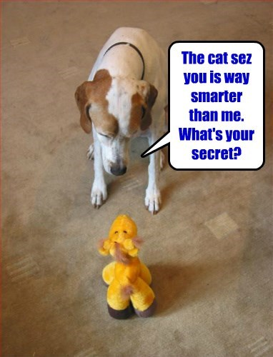 dogs secret smarter captions