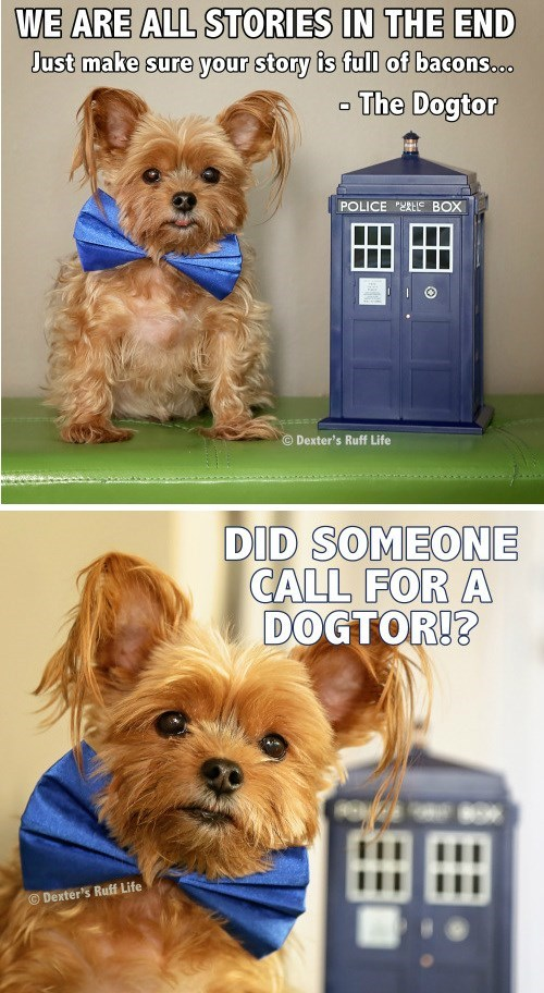 funny-doctor-who-adorable-dogtor-dog-wears-bowtie