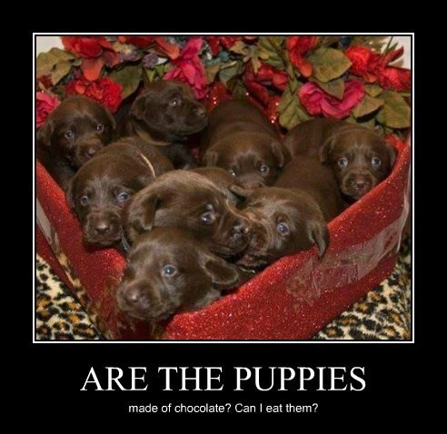 puppy cute funny Valentines day - 8448979712