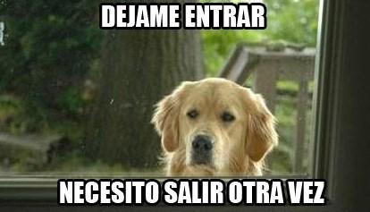 lógica canina
