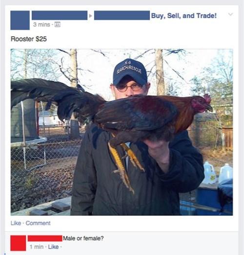 funny-facebook-fails-chicken