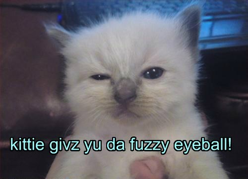 kittie givz yu da fuzzy eyeball!