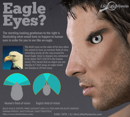 The eyes of an eagle