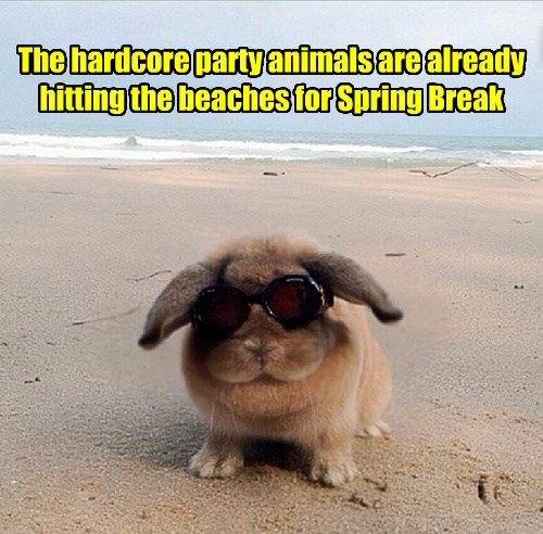 beach,bunny,Party,spring break