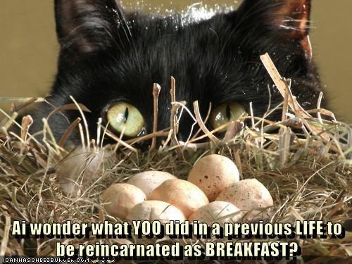 animals cat breakfast reincarnated caption - 8449172736
