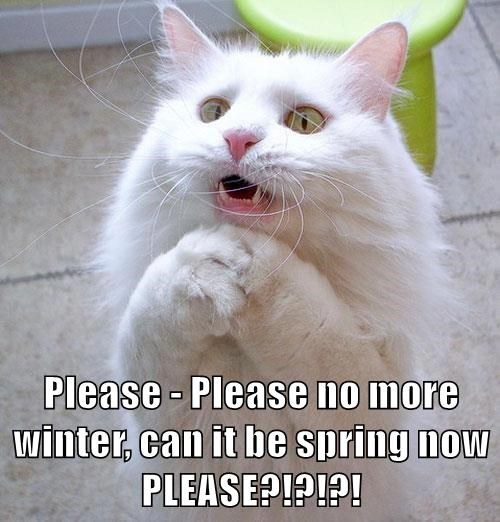 Please Please No More Winter Can It Be Spring Now Please