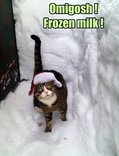snow milk frozen Cats
