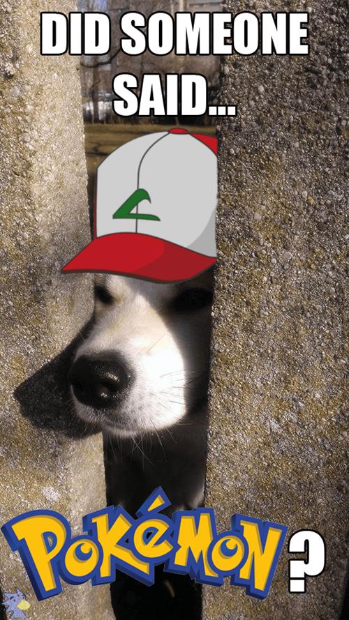 dogs Pokémon - 8449530880
