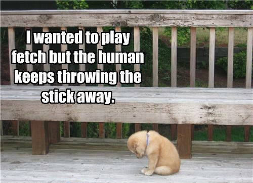 Sad fetch dogs puppy