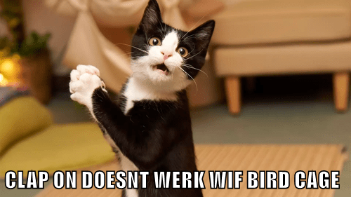 animals clapping bird noms Cats - 8449595392