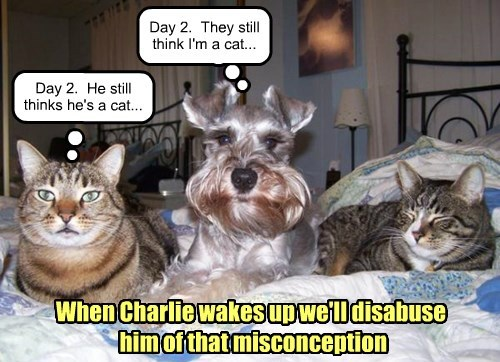 dogs,schnauzer,no idea,Cats