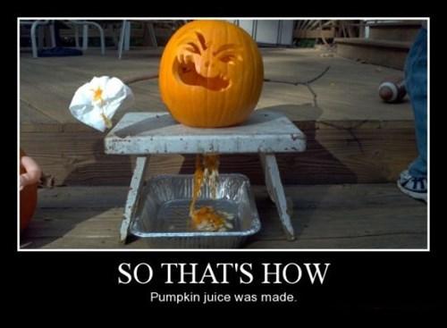 pumpkins eww juice funny - 8449705984