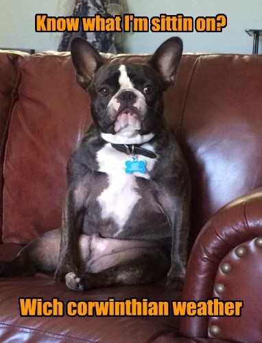 dogs french bulldogs comfy leather - 8449799680