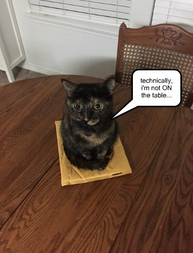 table innocent if i fits i sits Cats - 8449816576