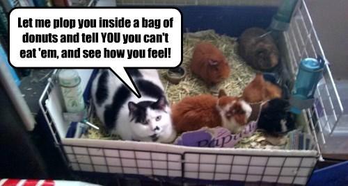 guinea pig jerk torture Cats - 8449840640