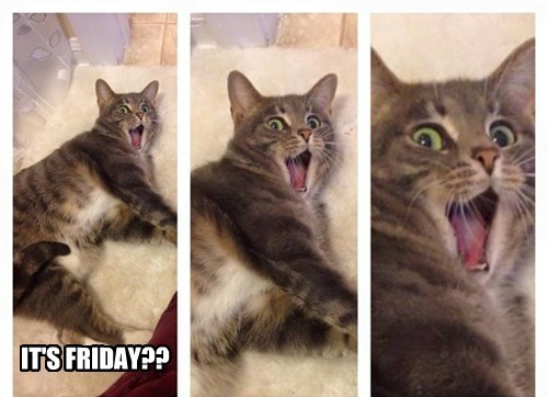 excited FRIDAY Cats - 8449843200