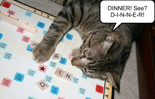 dinner noms Cats scrabble