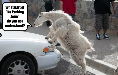 goat captions parking - 8449953280