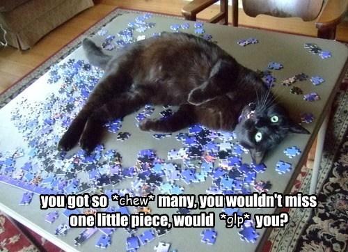 captions Cats funny - 8449976576