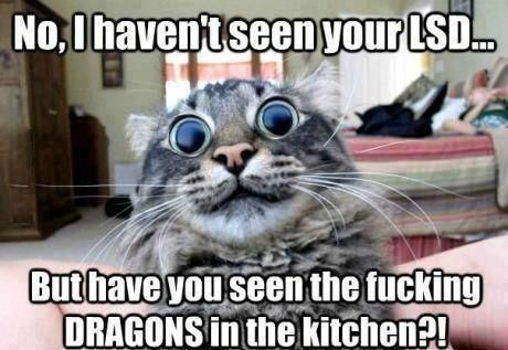 lsd really opens a cats eyes