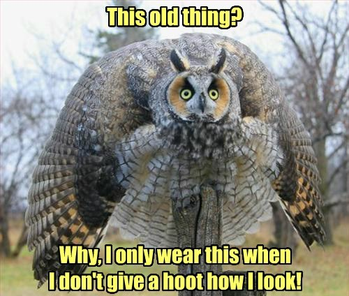 hoot,feathers,Owl