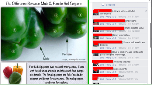 funny-facebook-fails-peppers-science-gender