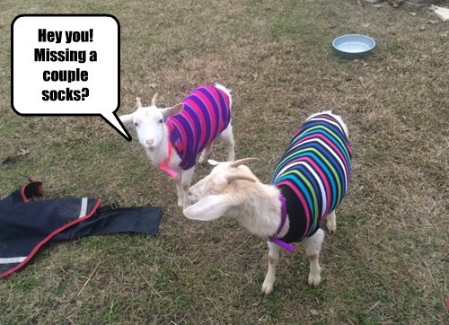 captions goats cute - 8450365440