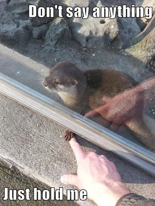 animals romance hold me otter hand - 8450370816