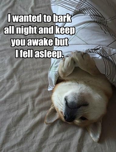dogs nap comfy blanket shiba inu - 8450535424