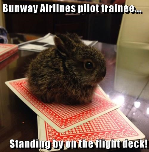 Bunway Airlines pilot trainee...  Standing by on the flight deck!