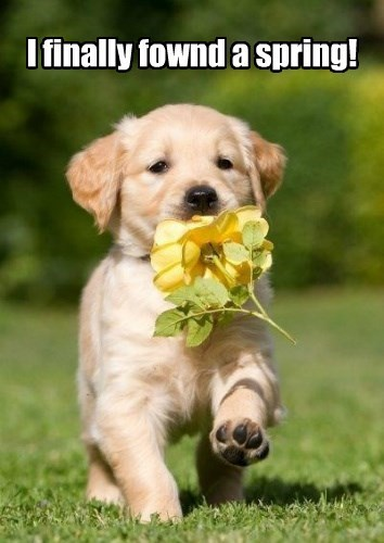 dogs spring puppy Flower squee - 8450590720