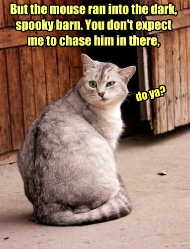 cat chase barn mouse - 8450752512