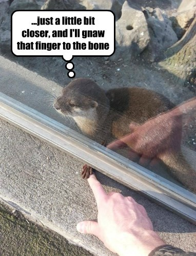 otter fingerfood funny - 8450832384