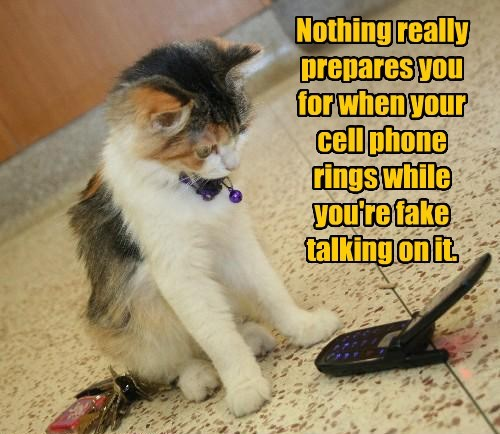 rings cat talking fake cell phone - 8450995200