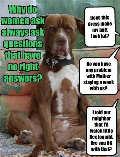 dogs,caption,questions,women