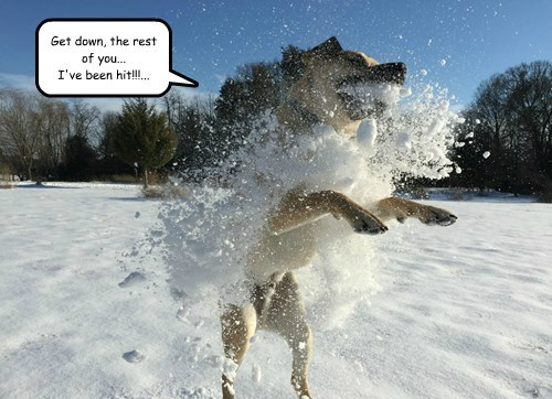 dogs,hit,snow ball