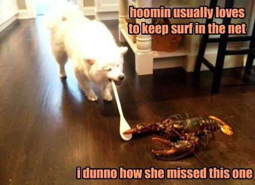 lobster,dogs,puns