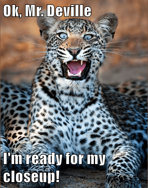 animals captions leopard funny
