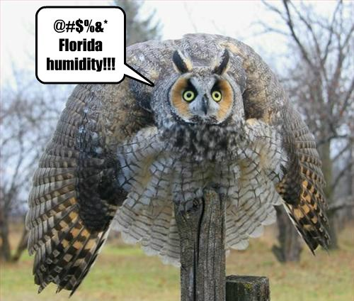 Owl funny captions - 8451203840