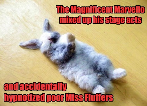 cute captions bunny funny - 8451304704