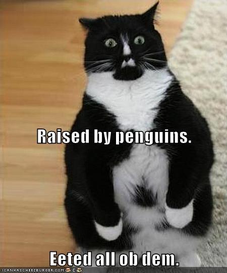 animals tuxedo eat Cats penguin - 8451318016